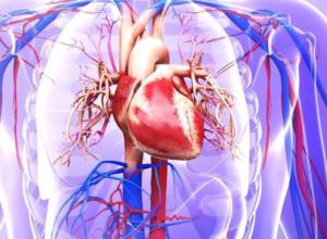 Нарушен пульс: советы при отклонениях сердечного ритма